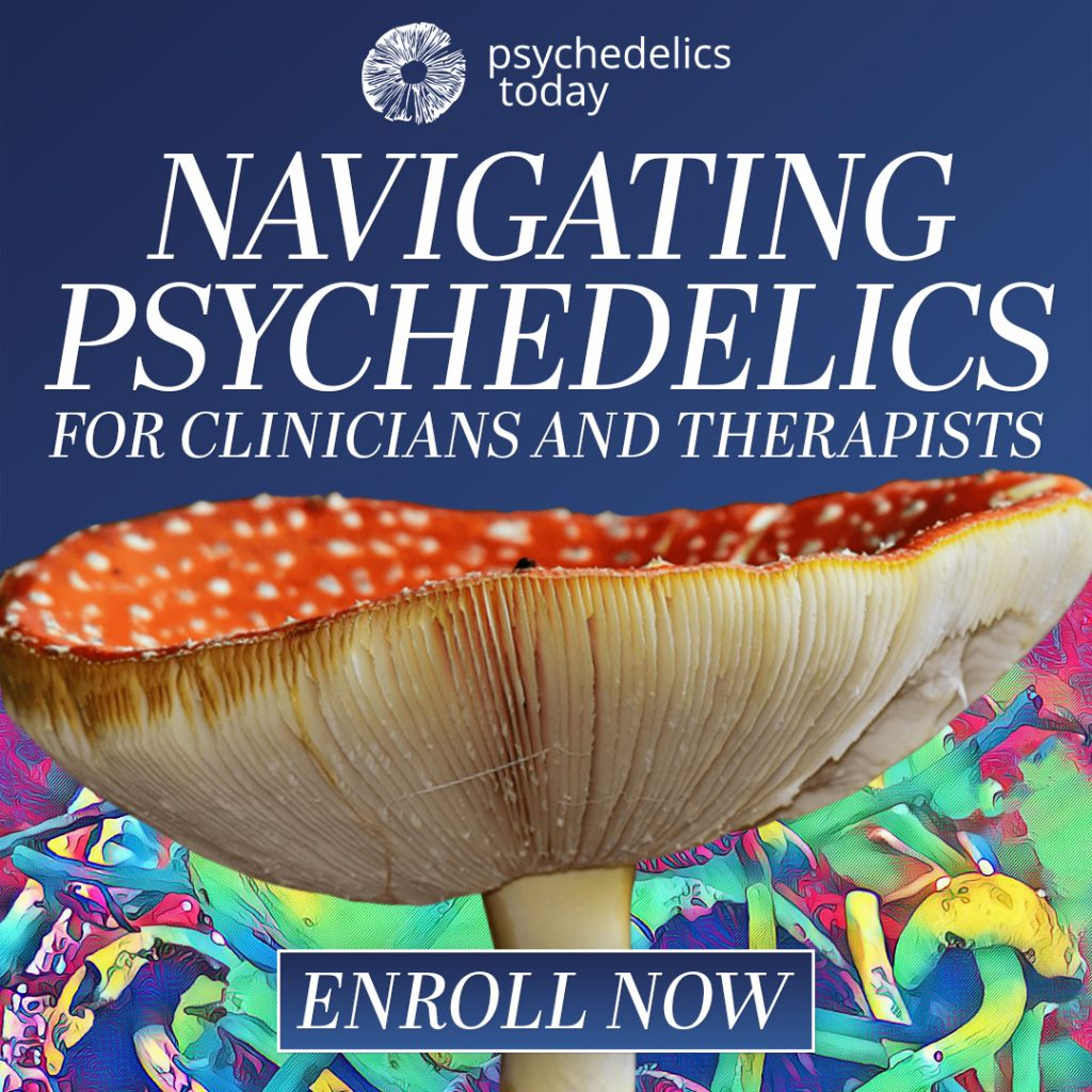 advertisement for the Psychedelics Today course, Navigating Psychedelics for Clinicians and Therapists. Picture of red Amanita Mascara mushroom